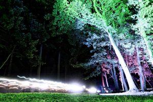 Tree Lighting Hertfordshire