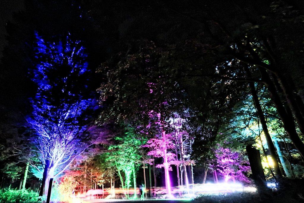Outdoor Tree Lighting Hertfordshire