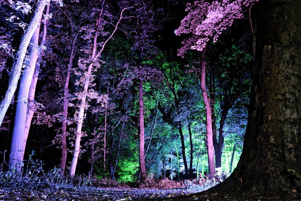 Woodland Lighting Cambridge