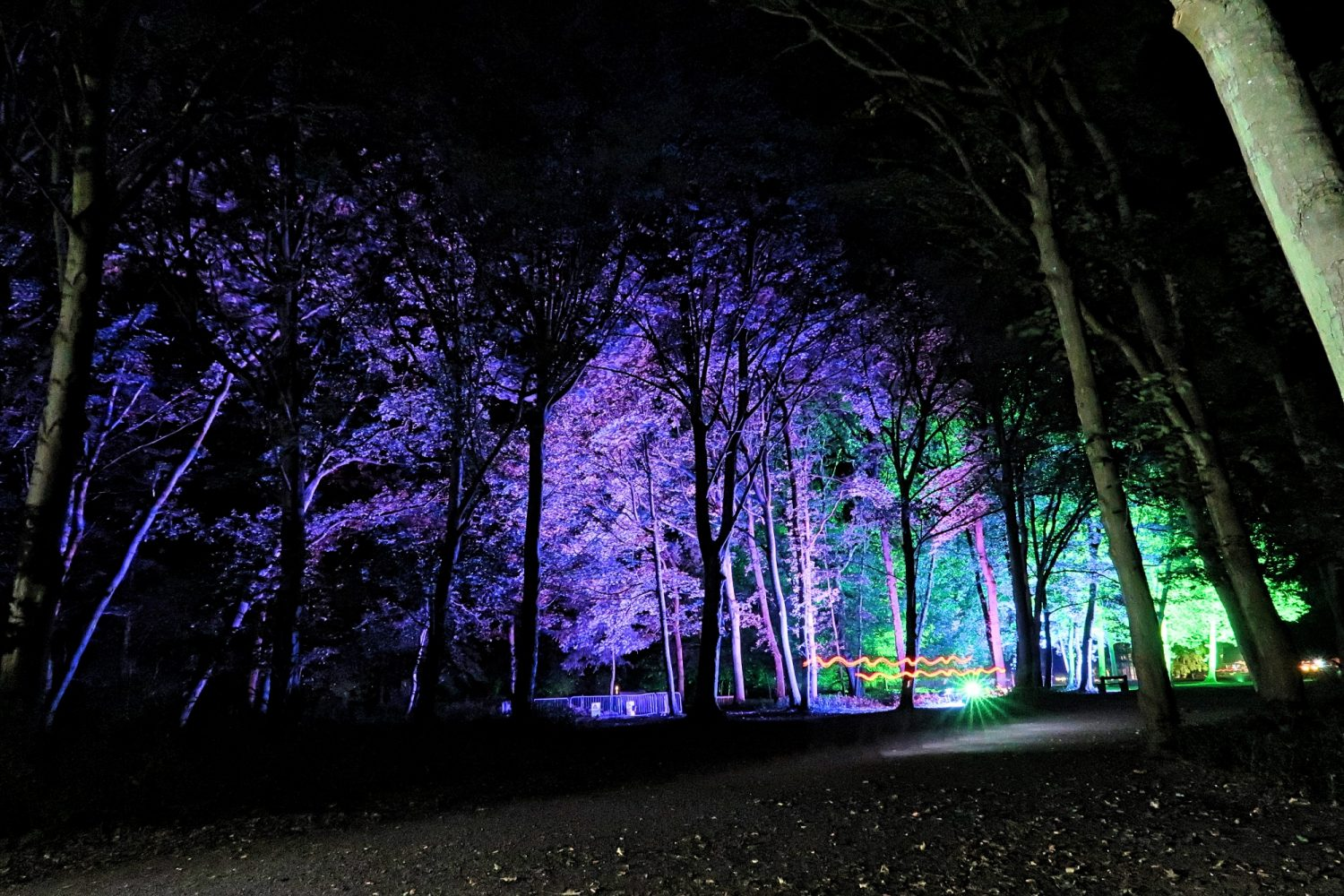 Woodland Event Lighting Cambridgeshire
